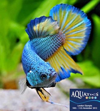 Aquatics Live